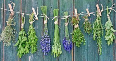 Вирощування лікарських трав як бізнес ідея для України