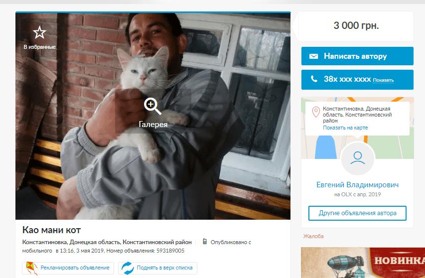 продаж котів породистих як бізнес в Україні