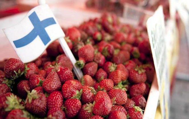 сезонна робота у Фінляндії