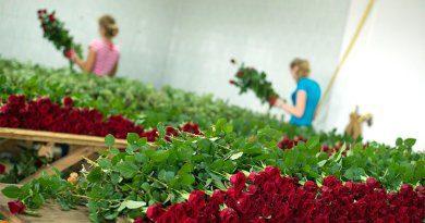 Вирощування квітів для продажу як бізнес ідея