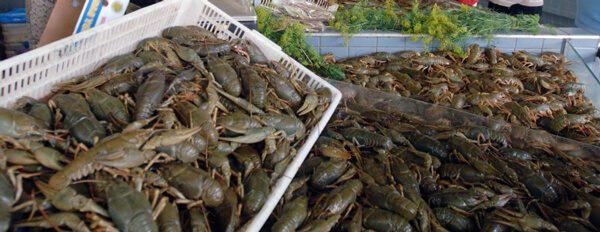 Вирощування раків як бізнес в Україні