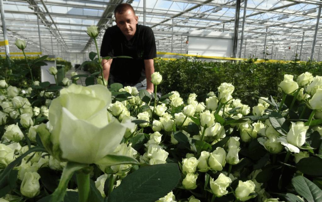 Заробити гроші на вирощуванні квітів