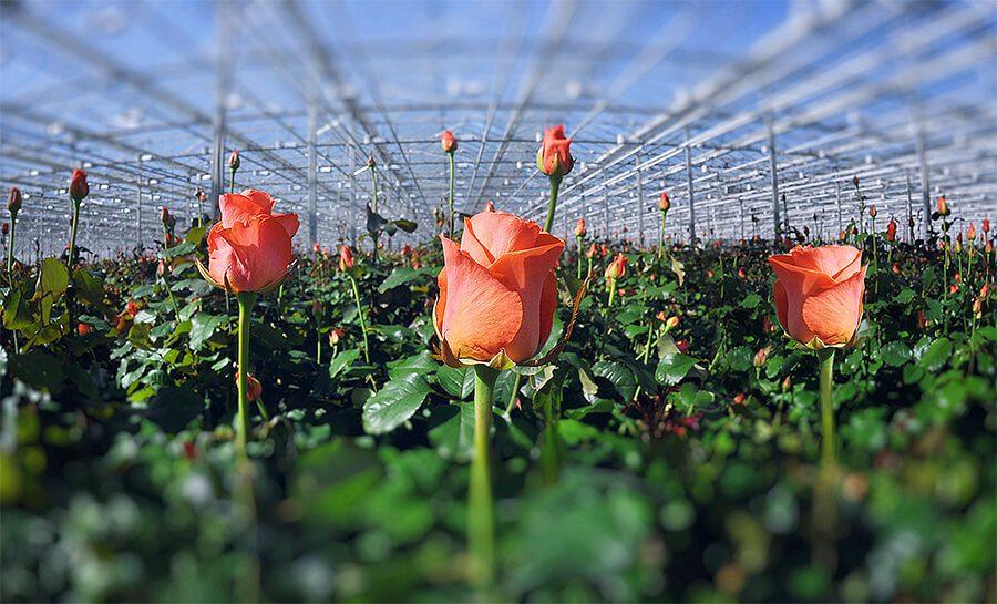Обладнання для вирощування квітів у закритому ґрунті