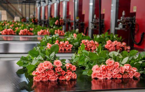 Скільки треба вкласти у вирощування квітів