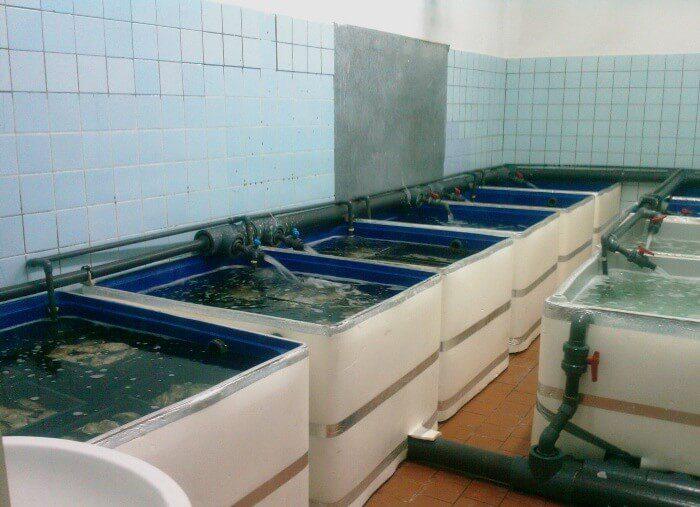 вирощування раків у акваріумах