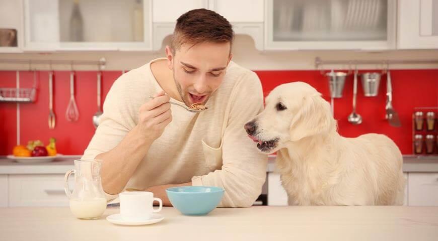 Професія дегустор корму для собак