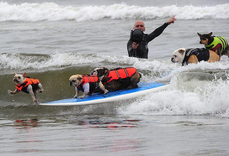 Серфінг для собак та посада інструктора